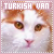 Cats: Turkish Vans